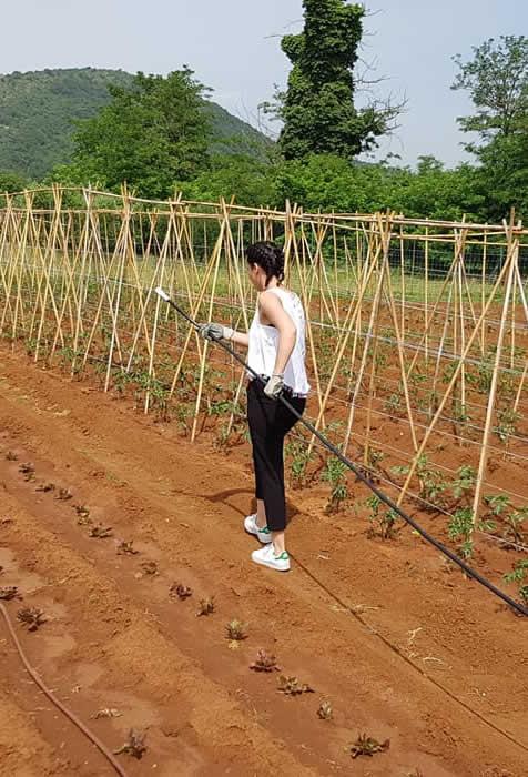 azienda agricola a Tecchiena