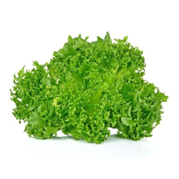 insalata riccia verde a Km 0