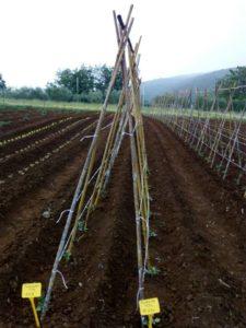 coltivazioni a Km 0